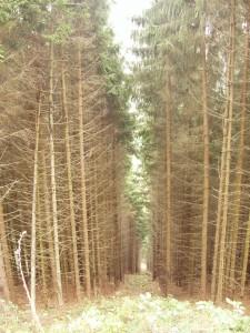 """""""Nirgendwo in Deutschland ist echter Wald duch Wild zerstört worden"""" - stimmt: es ist doch alles grün!"""